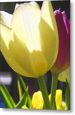 Tulip In Bright Sunlight Metal Print