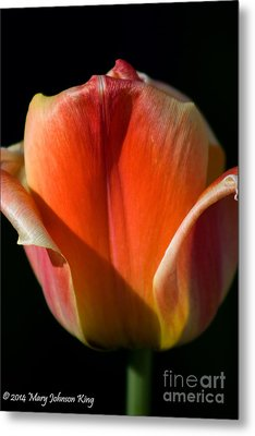 Tulip On Black Metal Print