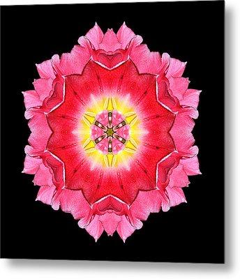 Tulip Peach Blossom I Flower Mandala Metal Print