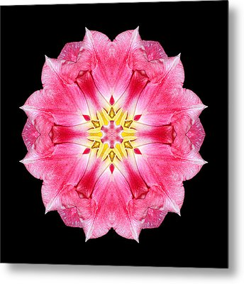 Tulip Peach Blossom IIi Flower Mandala Metal Print by David J Bookbinder
