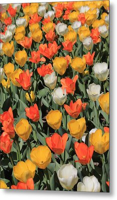 Tulip Stretch Metal Print