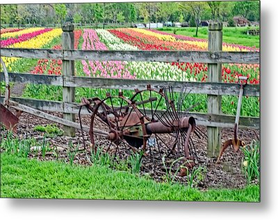 Tulip Time Metal Print by Cheryl Cencich