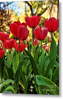 Tulip Time Metal Print by Peggy Hughes