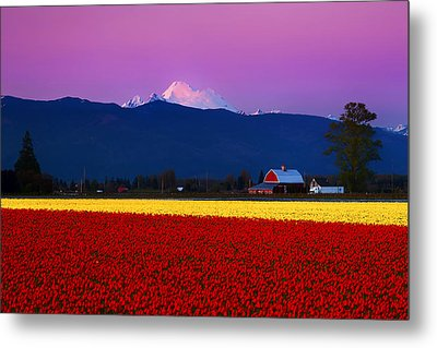 Tulip Twilight Metal Print