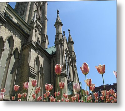 Tulip With The Church Metal Print by Alfred Ng