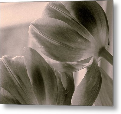 Tulips 2 Light Space Time  Botanicals Art Exhibition 2014  Special Merit Award Metal Print
