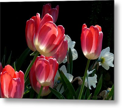 Metal Print featuring the photograph Tulips And Daffodils by Lucinda Walter