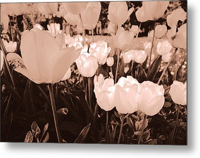 Metal Print featuring the photograph Tulips by Arkady Kunysz