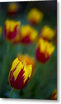 Tulips Metal Print by Chevy Fleet