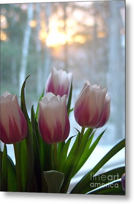 Metal Print featuring the photograph Tulips by Christopher Mace