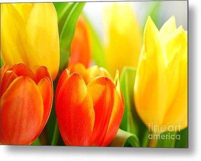 Tulips Metal Print by Elena Elisseeva