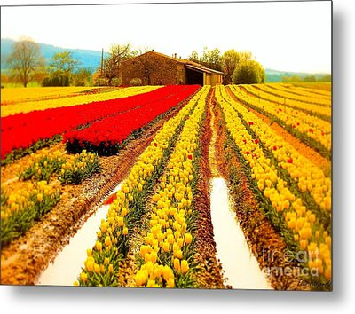 Tulips Field In Provence By A Farm Stone House France Metal Print by Flow Fitzgerald