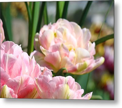 Tulips Flowers Garden Art Prints Pink Tulip Floral Metal Print by Baslee Troutman