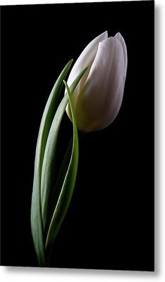 Tulips IIi Metal Print by Tom Mc Nemar