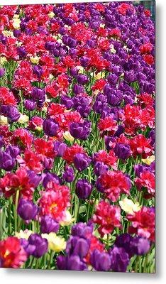 Tulips In A Meadow Metal Print