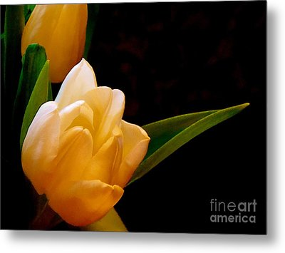 Tulips In Study 3 Metal Print by Cathy Dee Janes