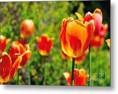 Metal Print featuring the photograph Tulips by Joe  Ng