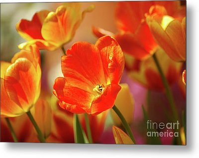 Tulips Metal Print by Kathleen Struckle