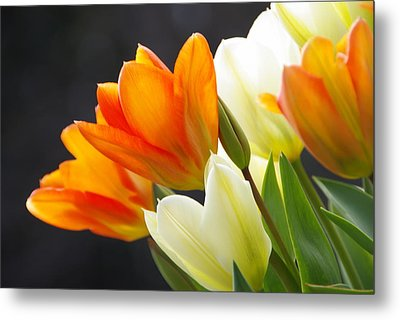 Metal Print featuring the photograph Tulips by Marilyn Wilson