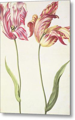 Tulips Metal Print by Nicolas Robert