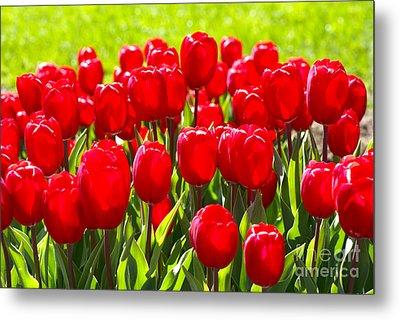 Tulips Metal Print by Nur Roy