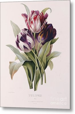 Tulips Metal Print by Pierre Joseph Redoute