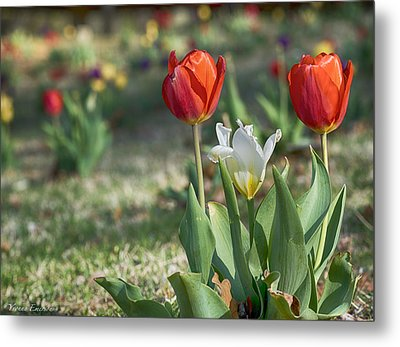 Metal Print featuring the photograph Tulips by Yvonne Emerson AKA RavenSoul