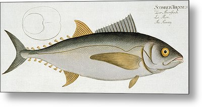 Tuna Metal Print by Andreas Ludwig Kruger