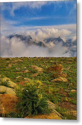 Metal Print featuring the photograph Tundra Delight by Rob Wilson