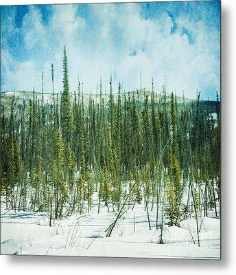 Tundra Forest Metal Print