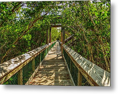 Tunnel Of Mangrove Green Metal Print
