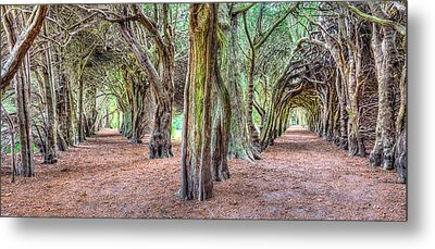 Tunnels Of The Intertwined Metal Print by Semmick Photo