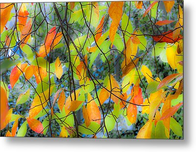 Tupelo Tapestry - Glowing Leaves Metal Print by Saxon Holt