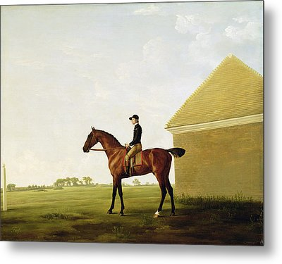 Turf Metal Print by George Stubbs