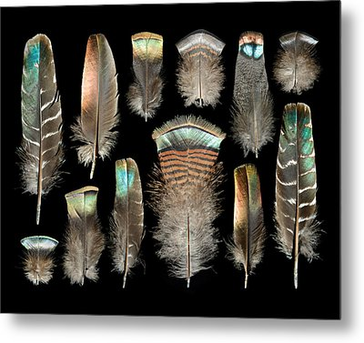 Turkey Metal Print by Chris Maynard