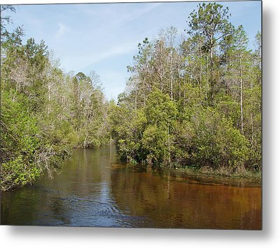 Metal Print featuring the photograph Turkey Creek Nature Trail In Niceville Florida by Teresa Schomig