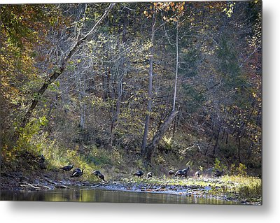 Turkey Crossing At Big Hollow Metal Print by Michael Dougherty