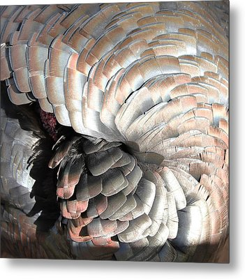 Metal Print featuring the photograph Turkey Siesta by Diane Alexander