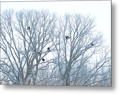 Metal Print featuring the photograph Turkey Tree by Dacia Doroff