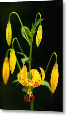 Metal Print featuring the photograph Turks Cap Candelabra by Photography  By Sai