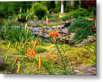 Metal Print featuring the photograph Turk's Cap Lily by Kathryn Meyer