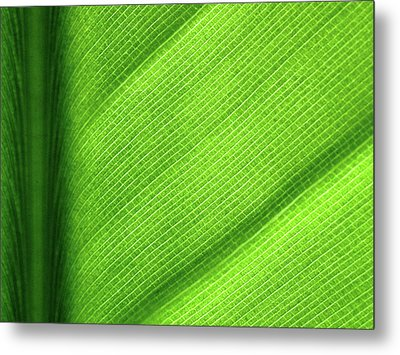 Turning A New Leaf Metal Print by Rona Black