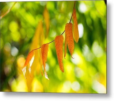 Metal Print featuring the photograph Turning Autumn by Aaron Aldrich