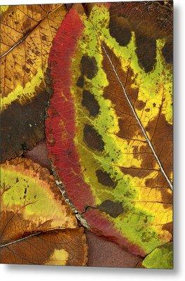 Turning Leaves 3 Metal Print by Stephen Anderson
