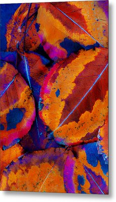 Turning Leaves 5 Metal Print by Stephen Anderson