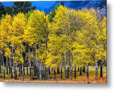 Turning Of The Aspens Metal Print