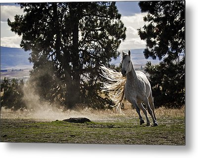 Turning On A Dime Metal Print by Wes and Dotty Weber
