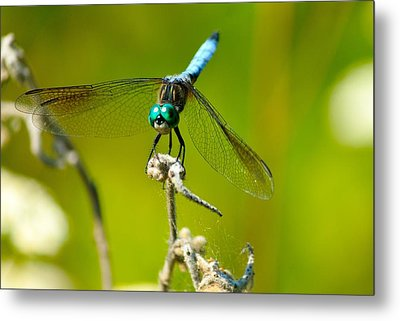 Turquoise Dragonfly Metal Print by Lorri Crossno