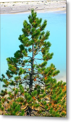Turquoise Tree Metal Print by Jon Emery