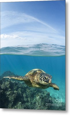 Turtle At Black Rock Metal Print